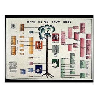 Cartão Postal O que nós obtemos das árvores