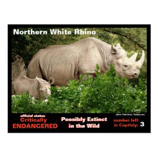 Cartão Postal O rinoceronte branco do norte é =~ critally psto