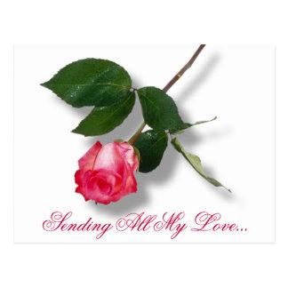 Cartão Postal O solteiro bonito do rosa aumentou