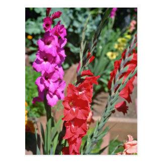 Cartão Postal O tipo de flor vermelho e cor-de-rosa desengaça