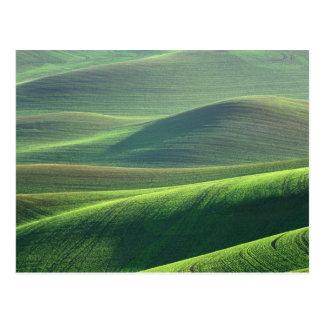 Cartão Postal O trigo salta acima nas colinas do Palouse