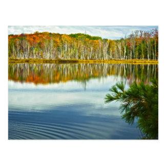 Cartão Postal O U.P.: Reflexões da árvore de vidoeiro do outono