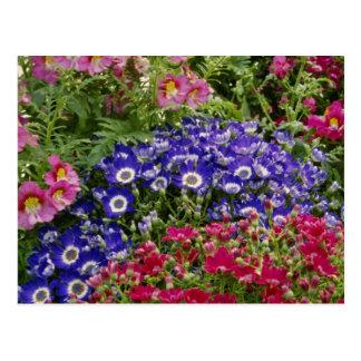 Cartão Postal O verão colore flores