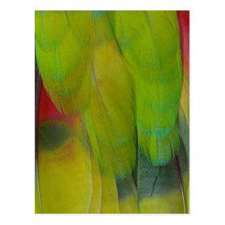 Cartão Postal O verde dirigiu o vertical do papagaio