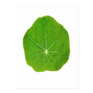 Cartão Postal O verde do apoio, salvar o planeta