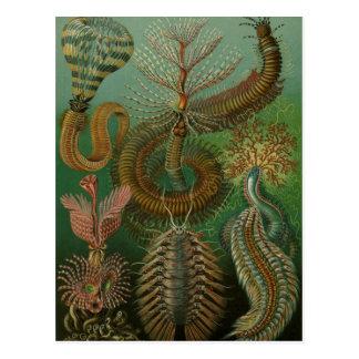 Cartão Postal O vintage Worms anelídeos Chaetopoda por Ernst