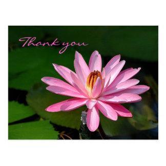 Cartão Postal obrigado cor-de-rosa do lírio de água você