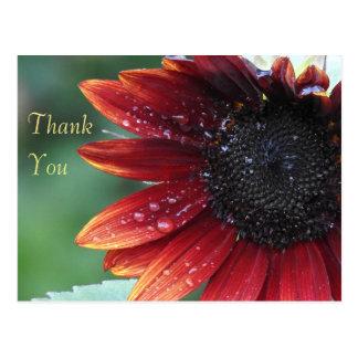 Cartão Postal Obrigado girassol vermelho