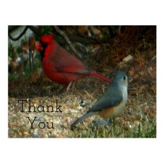 Cartão Postal Obrigado Titmouse cardinal vermelho