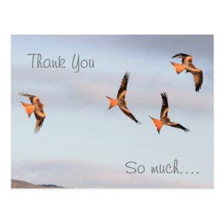 Cartão Postal Obrigado vermelho do papagaio você