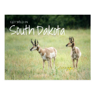 Cartão Postal Obtenha selvagem em South Dakota