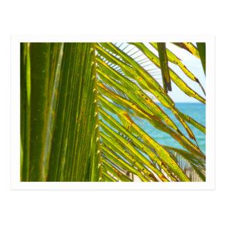 Cartão Postal Oceano Atlântico através das frondas da palma
