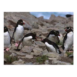 Cartão Postal Oceano Atlântico, Ilhas Falkland. Rockhopper 2
