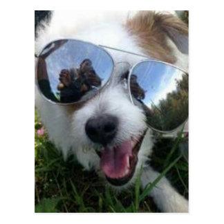 Cartão Postal Óculos de sol no FUTURO BRILHANTE do cão para MIM