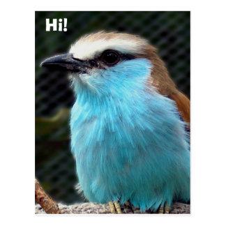 Cartão Postal Olá!!