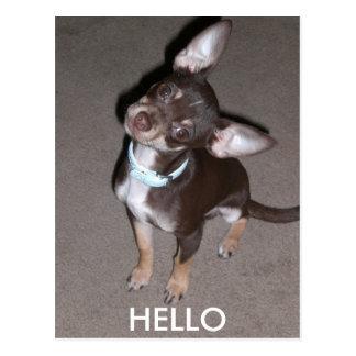 Cartão Postal OLÁ! chihuahua