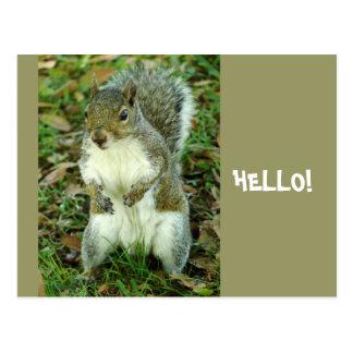 Cartão Postal Olá!, esquilo ereto bonito