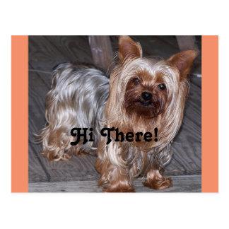 Cartão Postal Olá! lá yorkshire terrier
