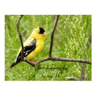 Cartão Postal Olá!, olá!, Goldfinch Pássaro-Americano