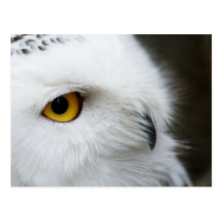 Cartão Postal Olho da coruja