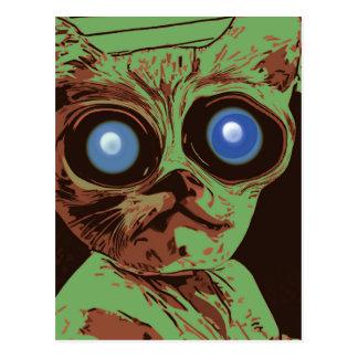 Cartão Postal Olhos de gato loucos
