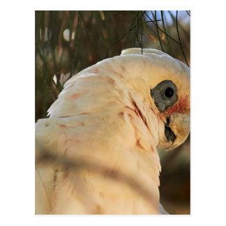 Cartão Postal Olhos do pássaro