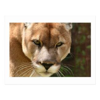Cartão Postal olhos do puma