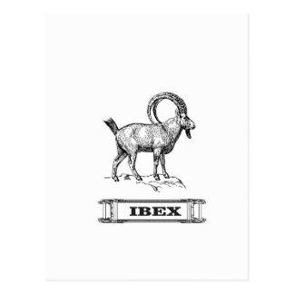 Cartão Postal onda do rico do íbex