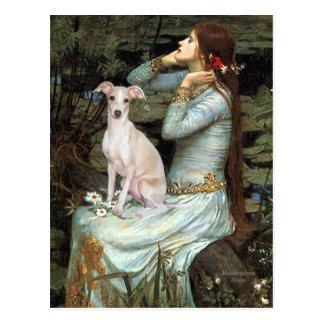 Cartão Postal Ophelia - galgo italiano 5
