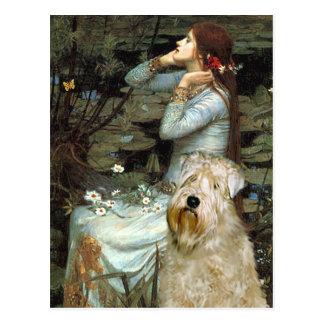 Cartão Postal Ophelia - Terrier Wheaten
