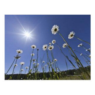 Cartão Postal Opinião de baixo ângulo de flores e de sunburst da