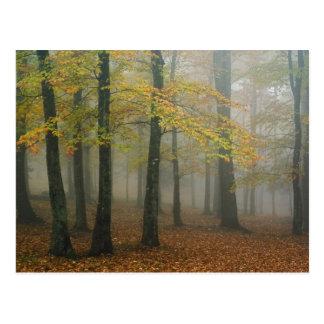 Cartão Postal Opinião do outono da floresta nevoenta, avô 3