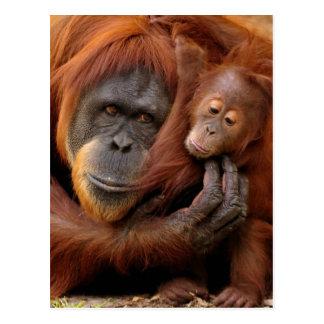 Cartão Postal Orangotango da mãe & do bebê