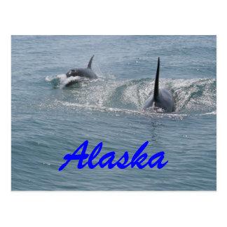 Cartão Postal Orca e vitela, Alaska