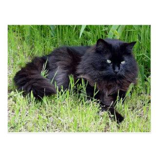 Cartão Postal Orgulhoso régio felino do cabelo longo macio do