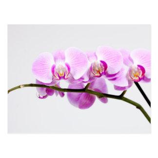 Cartão Postal orquídea
