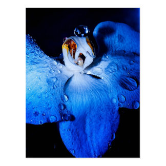 Cartão Postal Orquídea azul