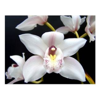 Cartão Postal Orquídea bonita