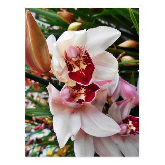 Cartão Postal Orquídea branca e cor-de-rosa do Phalaenopsis
