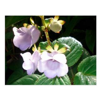 Cartão Postal Orquídea do roxo de Fiji