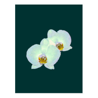 Cartão Postal Orquídea os presentes Zurique 2000 de Zazzle do