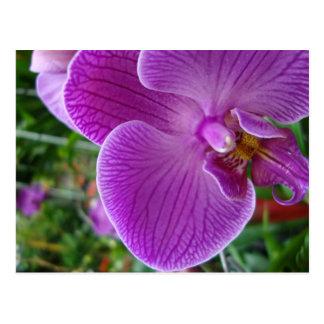 Cartão Postal Orquídea roxa