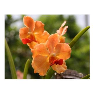 Cartão Postal Orquídeas