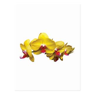 Cartão Postal Orquídeas amarelas brilhantes do Phalaenopsis