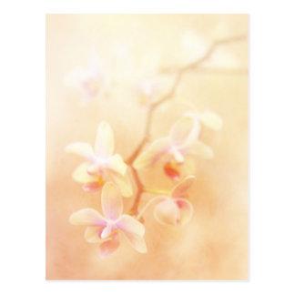 Cartão Postal Orquídeas macia desvanecidas