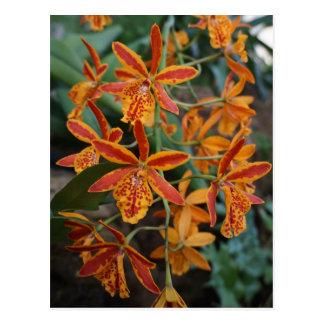 Cartão Postal Orquídeas nos jardins botânicos