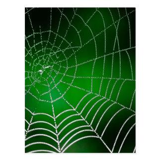 Cartão Postal Orvalho no spiderweb