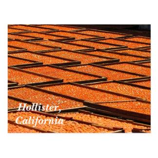 Cartão Postal Os abricós famosos de Hollister, Califórnia