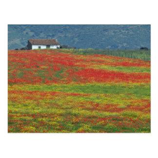 Cartão Postal Os campos das papoilas aproximam Córdova, a