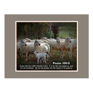 Cartão Postal Os carneiros de seu PasturewScripture
